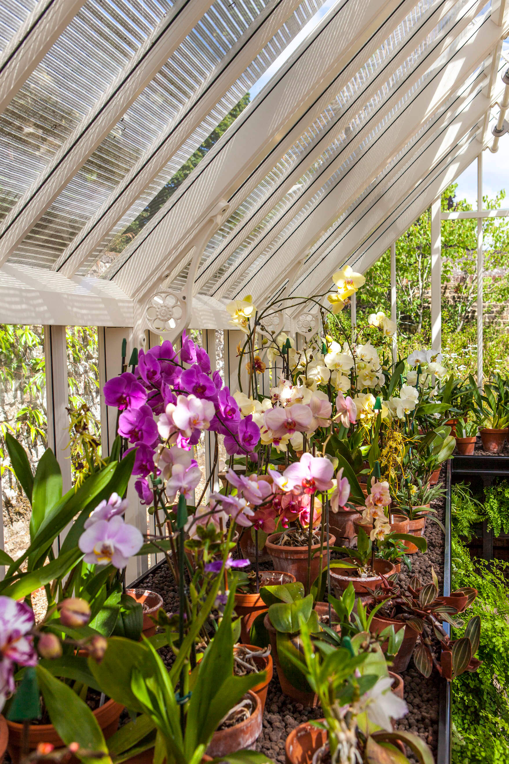 All Things Orchid