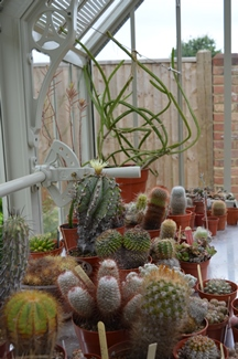 Cacti collection under the fell shades
