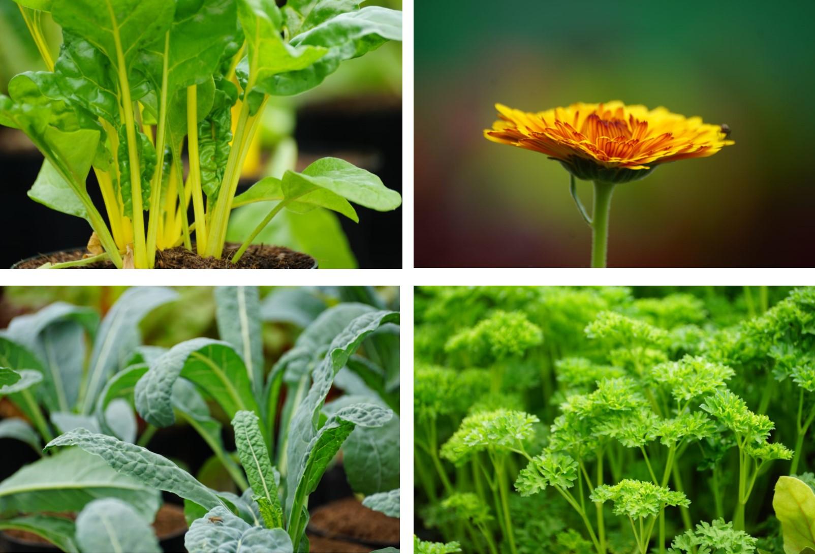 Chewton Glen, growing edible kitchen garden