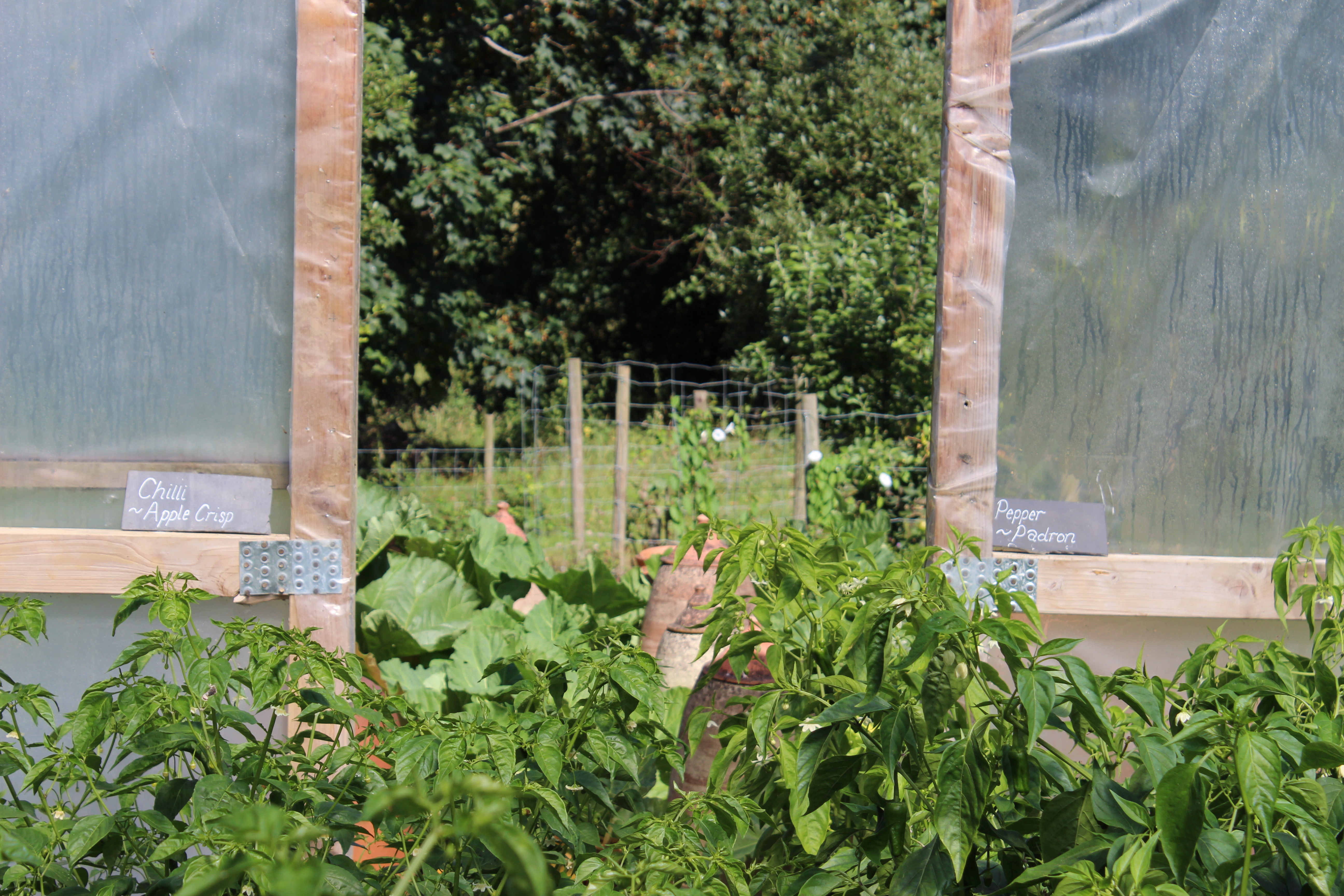 Allotment with peppers