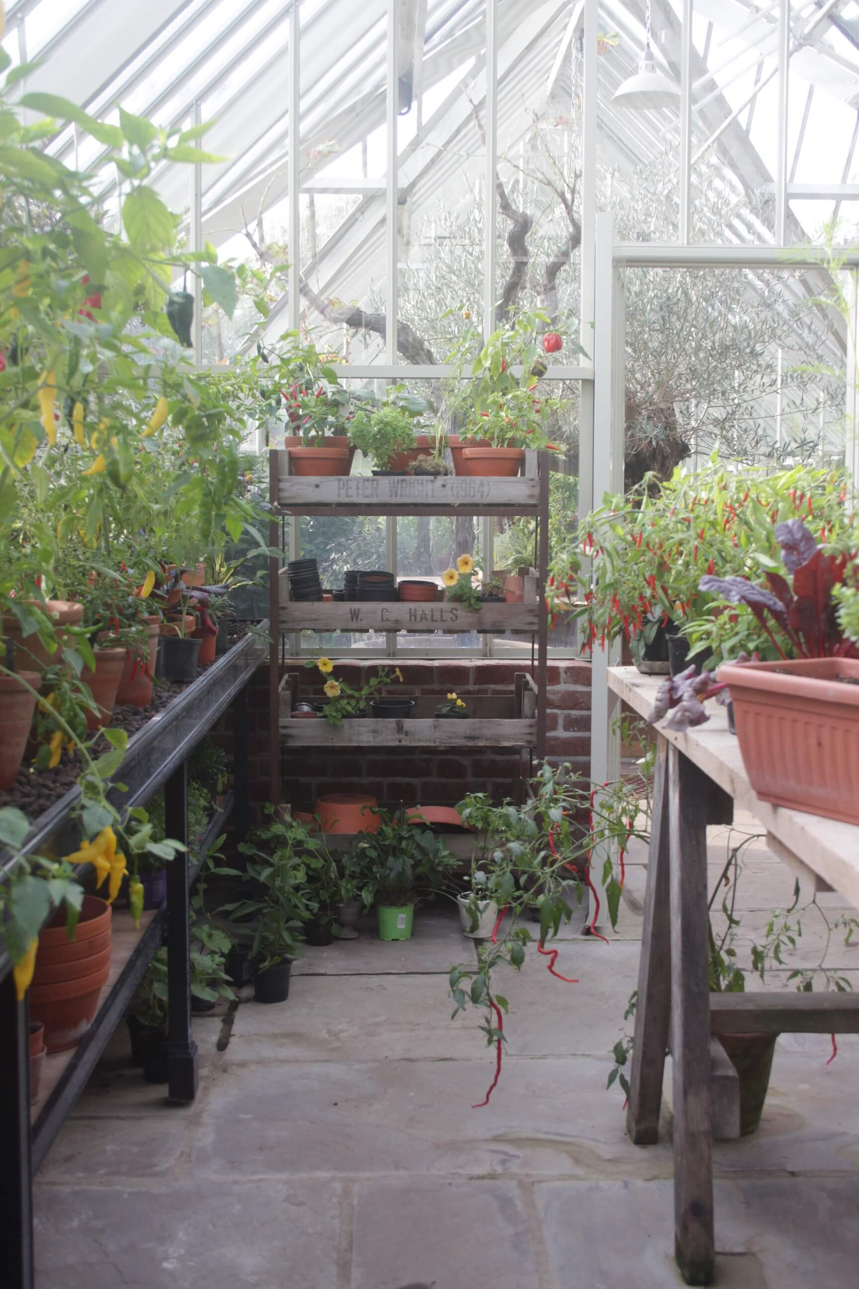 Inside a working growing greenhouse