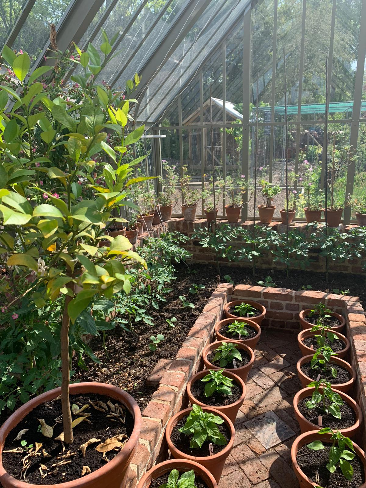 Planting in the greenhouse