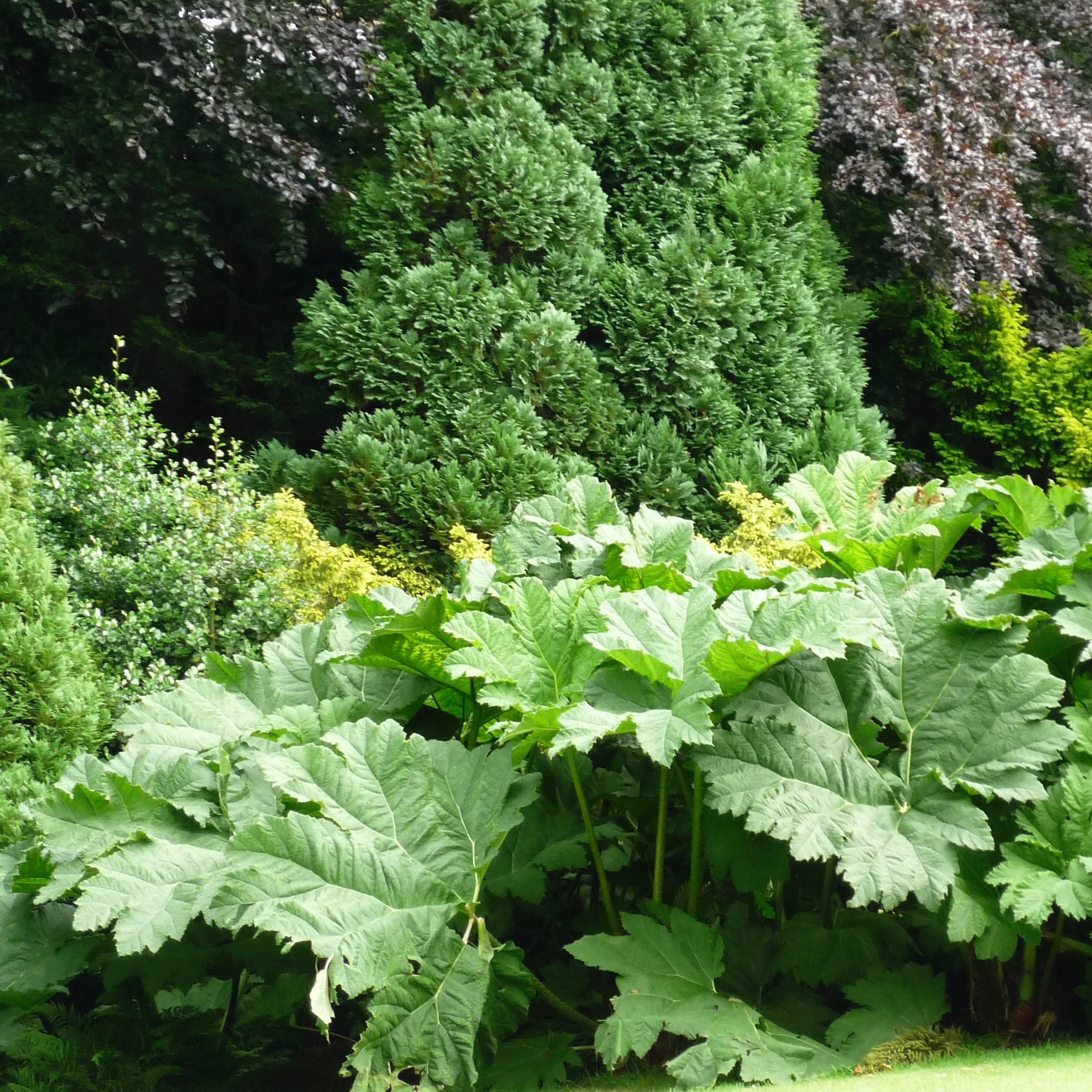 Matt Haddon blog post gunnera