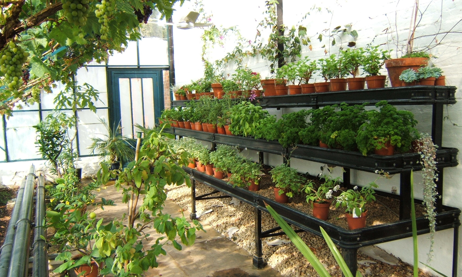 Alitex tiered benching for displaying plant collections
