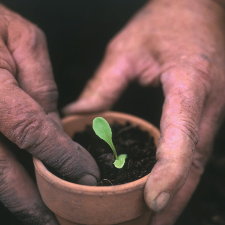Tender loving care for your plants and seedlings