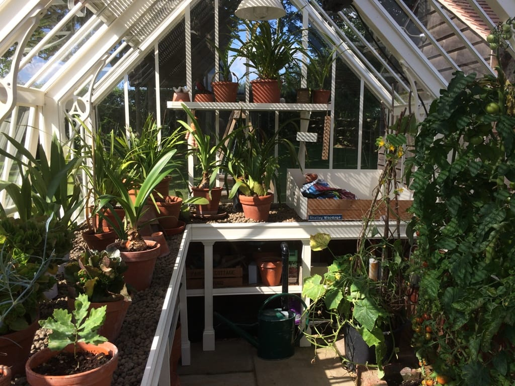 Inside the Scotney Greenhouse