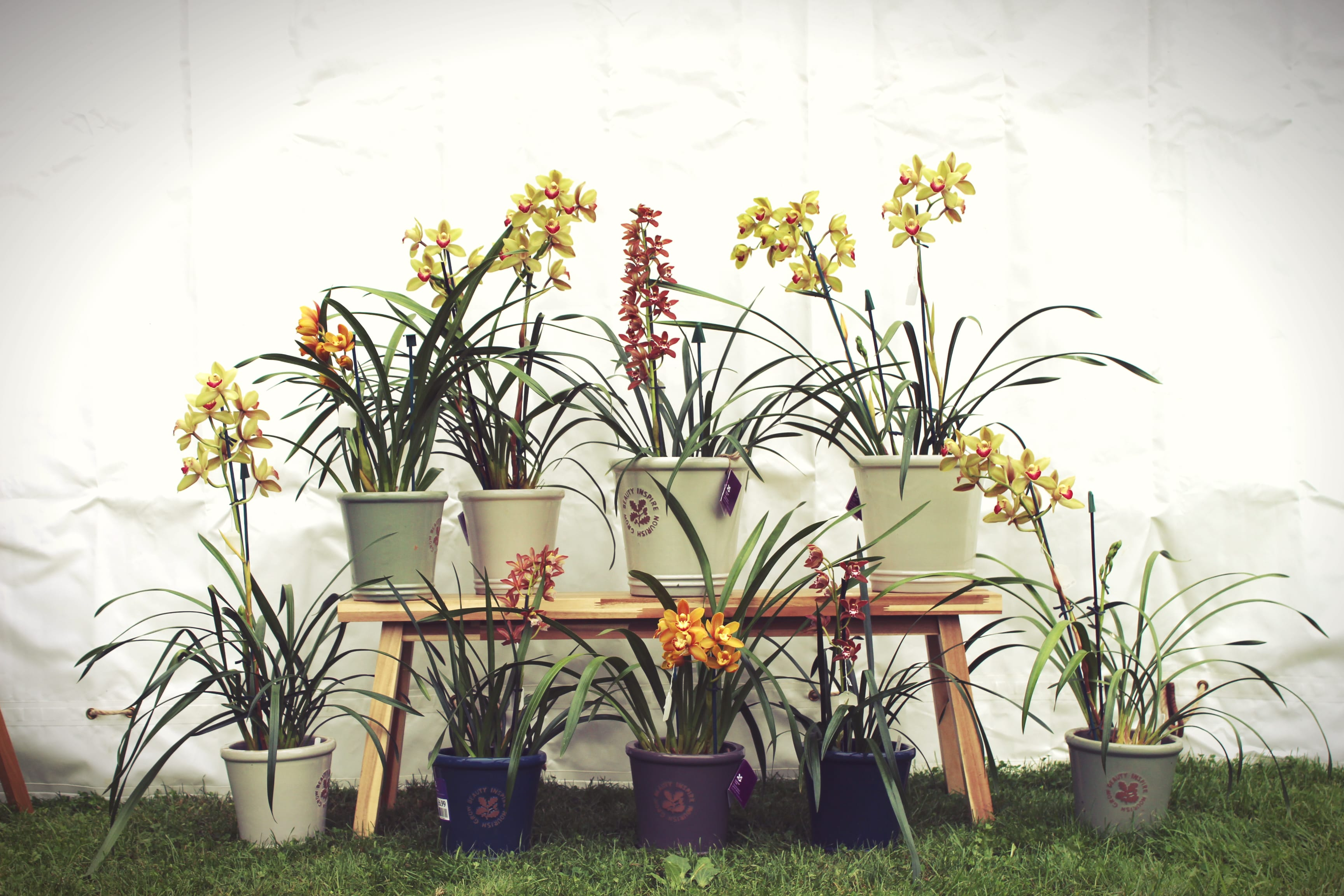Woodlodge products and Mcbean's Orchids