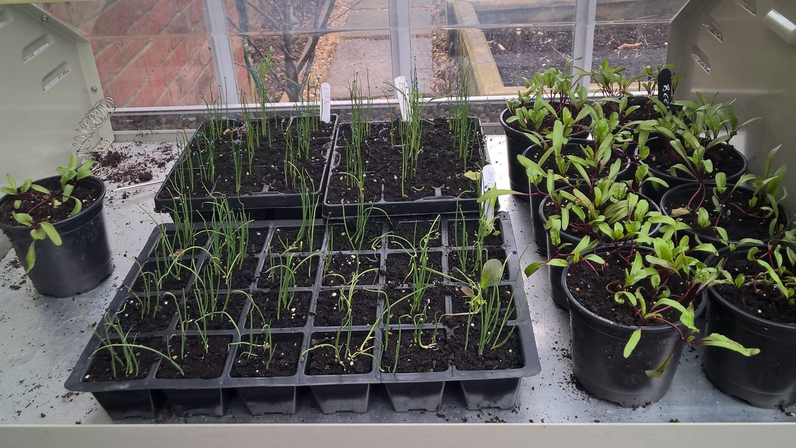 Potted Seedlings of Beetroot and Leeks