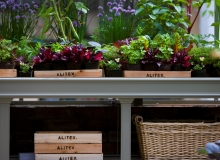 Alitex-traditional-greenhouse-bench-colour-matched-to-aluminium-greenhouse