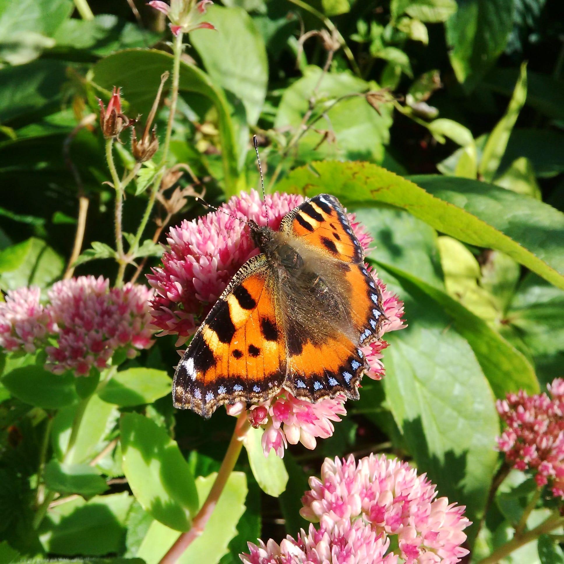 Matt Haddon - Butterflies