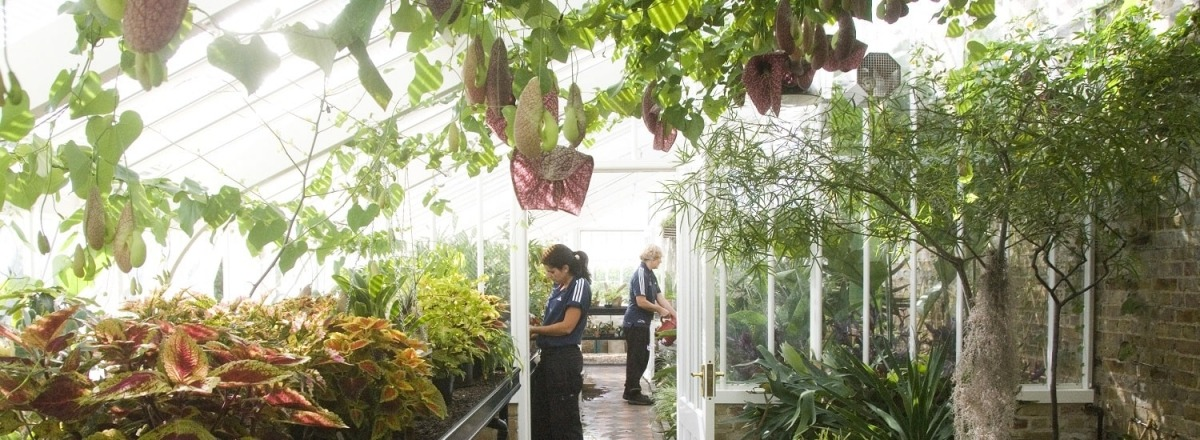 Replicated greenhouse at Myddelton House Gardens