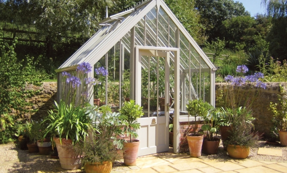 National Trust Hidcote greenhouse in Wood Sage in small cottage garden