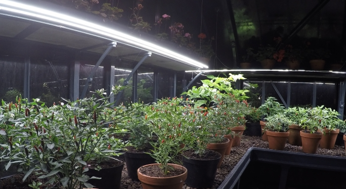 Alitex LED Grow Lights