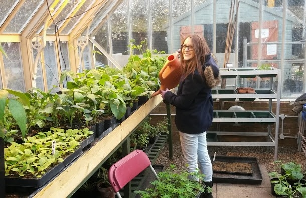 Sam at in large bespoke freestanding greenhouse, watering Thrives plants for RHS Chelsea Flower Show