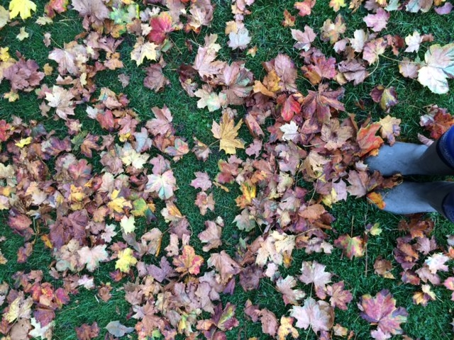 Autumn leaves at Uppark