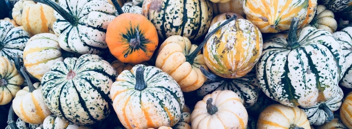 Autumn Squashes - Risotto Recipe