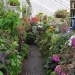 Top Tips for Winter Gardening with Sarah Wain