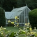 USA glasshouse - soft focus