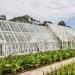 large-bespoke-alitex-greenhouse-at-logan-botanic-gardnes