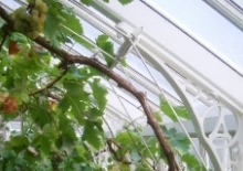 alitex-greenhouse-fruit-supports